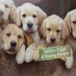 Ability Dogs 4 Young People